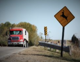 Kansas had 10-year high for deer-related crashes in 2018