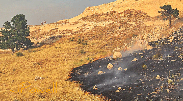 A mule deer doe and two fawns stand in the distance as the fire burns in the Wildcat Hills. (Photo by Justin Powell)